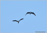 ゴイサギ 大空を通過 - 野鳥の素顔 <野鳥と・・・他、日々の出来事>