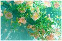水中花 - my Photo blog