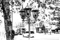 白樺と葉陰の街灯 - 照片画廊