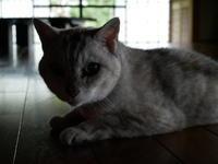 モン様、サインをありがとう - ご機嫌元氣 猫の森公式ブログ