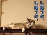 言い訳 - ぎんネコ☆はうす