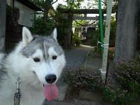 ジロちゃん、ふれあいタイム♪ (^o^) - 犬連れへんろ*二人と一匹のはなし*