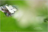 6月の雨の日に*Ⅳ - It's only photo