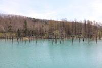 北海道旅行⑪ 青い池と美瑛神社 5月10日 - nana日記