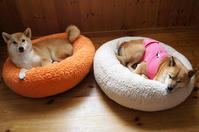 日向ぼっこしたベッド - abby & zack