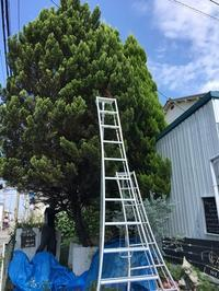 お店の大きな木 - mon dimanche blog