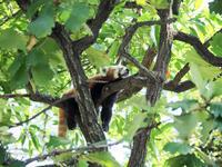 野毛山動物園 7月12日 - お散歩ふぉと