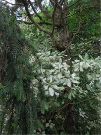 植物的生活823 - Atelier Botanique COCA-Z