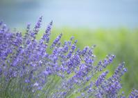 初夏の香り - ほほえみ