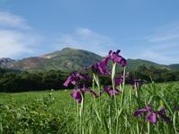 小さな山をハシゴしてみた <指山・猟師岳・合頭山・黒岩山・ソロ> - ワカバノキモチ 朝暮日記