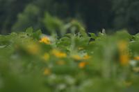 定点観察…【オオヨシキリ・アオバズク・ササゴイ・アオアシシギ・コチドリ】 - 鳥観日和