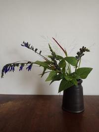 パニカム・スモークグラス - 暮らしと植物のブログ