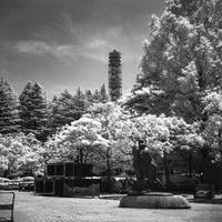 猛暑でも解けない雪にパニクる公園 - Film&Gasoline