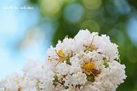 暑い青空をバックが似合う花をモデルに!(^^)! - 自然のキャンバス
