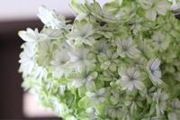 紫陽花 万華鏡をドライに - my small garden~sugar plum~