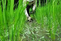 無能の人と無農薬の人・・・トンボの羽化とヤブカンゾウ - 朽木小川より 「itiのデジカメ日記」 高島市の奥山・針畑郷からフォトエッセイ