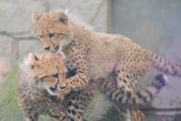 火曜日の動物園 - 動物園に嵌り中