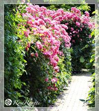 満開のバラに囲まれて〜ロイズローズガーデン - Rosy Rosette カルトナージュ日記