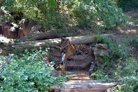 ネコダム - 動物園へ行こう