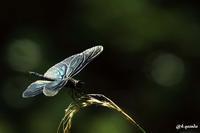 蝶とんぼ - 四季折々に・・・・・