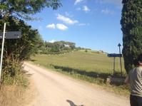 夏に見る、黄色いじゅうたん - フィレンツェのガイド なぎさの便り