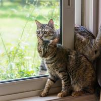 網戸とガラスの間 - 猫と夕焼け