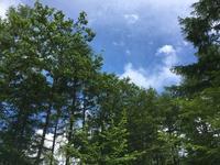 標高1650M(1) - 花と香りと、そして雲
