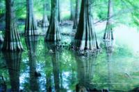 水辺の樹 - koharu*biyori