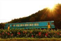 ひまわり畑の夕暮れに - 今日も丹後鉄道