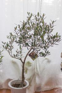 オーダー品:ご新築記念のシンボルツリー - le jardinet