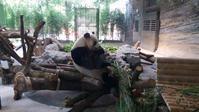 午後のパンダ - 毎日ベルリン!