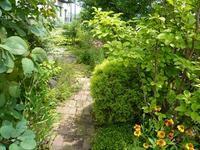 ぼうぼう - natural garden~       shueの庭いじりと日々の覚書き
