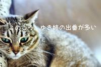 にゃんこ劇場「女の戦い?」 - ゆきなそう  猫とガーデニングの日記