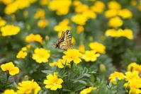 黄色い花と蝶 - 光の贈りもの