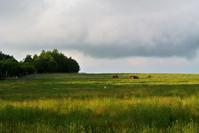 今日の散歩コースは蓼科第二牧場 - ホンマ!気楽おっさんの蓼科偶感