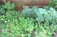 小さなポタジエの庭は今 - にこにこ日和