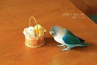 B.B & ヒヨココンビ そして、 - FUNKY'S BLUE SKY