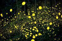 天然イルミネーション - 写真ブログ「四季の詩」