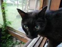 """夏休みキャンペーン""""猫の森体験企画"""" - ご機嫌元氣 猫の森公式ブログ"""