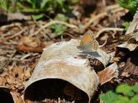 草原の風に翔ぶ蝶を追って(その4) - 不思議の森の迷い人
