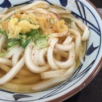 かけうどん@丸亀製麺 - 香港と黒猫とイズタマアル2