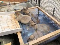 7月16日(日) 名湯 - ほのぼの動物写真日記
