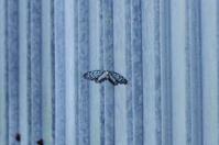 蝶を追う - 生きる。撮る。