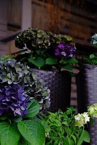 お店の風景と入荷のお花 - mon dimanche blog