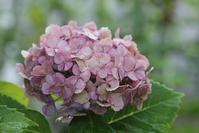 庭の花と作品 - マミィの花と手づくりの時間