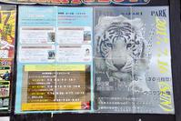 2017.7.16 岩手サファリパーク☆ホワイトタイガーのマハロお誕生日会【White tiger】 - 青空に浮かぶ月を眺めながら