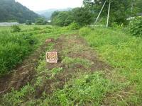 29年のジャガイモ掘り完了です。 - チドルばぁばの家庭菜園日誌パート2