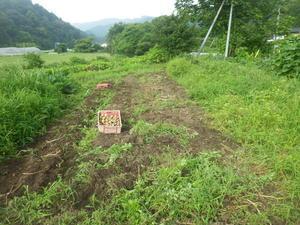 29年のジャガイモ掘り完了です。 -