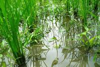 農的環境、田んぼで子育てを!・・・オクヤマガーデンのあじさい - 朽木小川より 「itiのデジカメ日記」 高島市の奥山・針畑郷からフォトエッセイ
