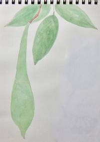 #植物スケッチ 『藤』 - スケッチ感察ノート